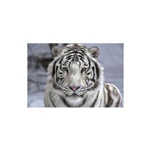 White Tiger Diamond Art Kit - 40x60 Round Drills EXCLUSIVE