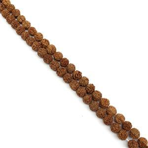 Double Trouble! 2x 85cts Brown Rudrakhsa Fancy Round Approx 9mm, 38cm Beads Strand