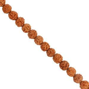 28cts Brown Rudrakhsa Fancy Round Approx 5mm, 38cm Beads Strand