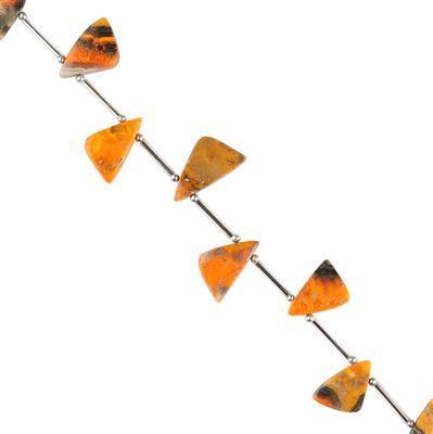 40cts Bumble Bee Jasper Graduated Plain Triangular Slices Approx 13x10 to 16x12mm,  14cm Strand.