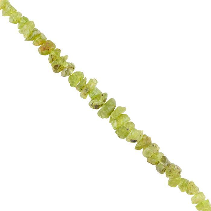 140cts Peridot Graduated Rough Nuggets Approx 7x5 to 14x6mm, 16cm Strand.