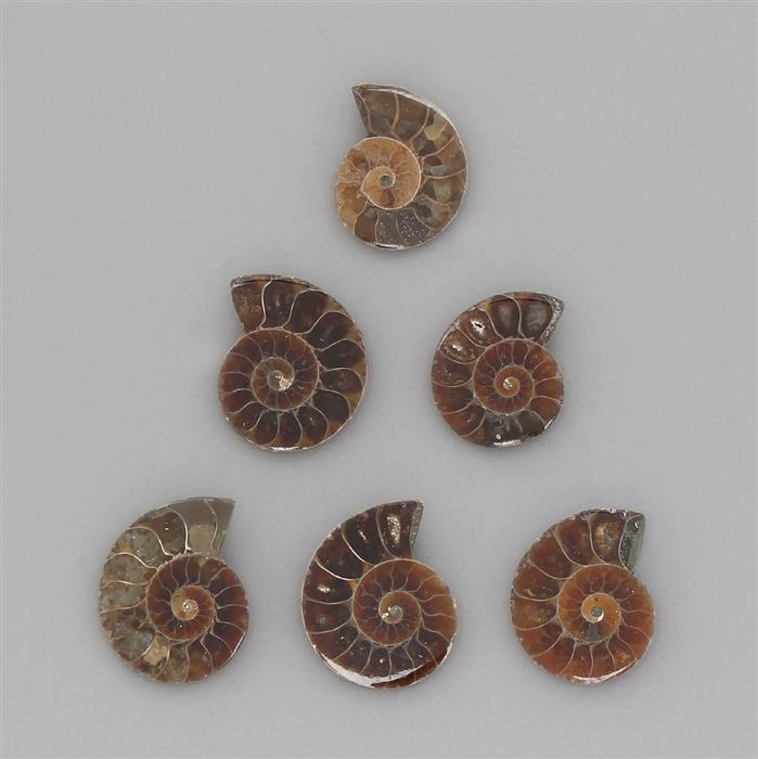 140cts Fossil Ammonite Spiral Cabochons Assortment.