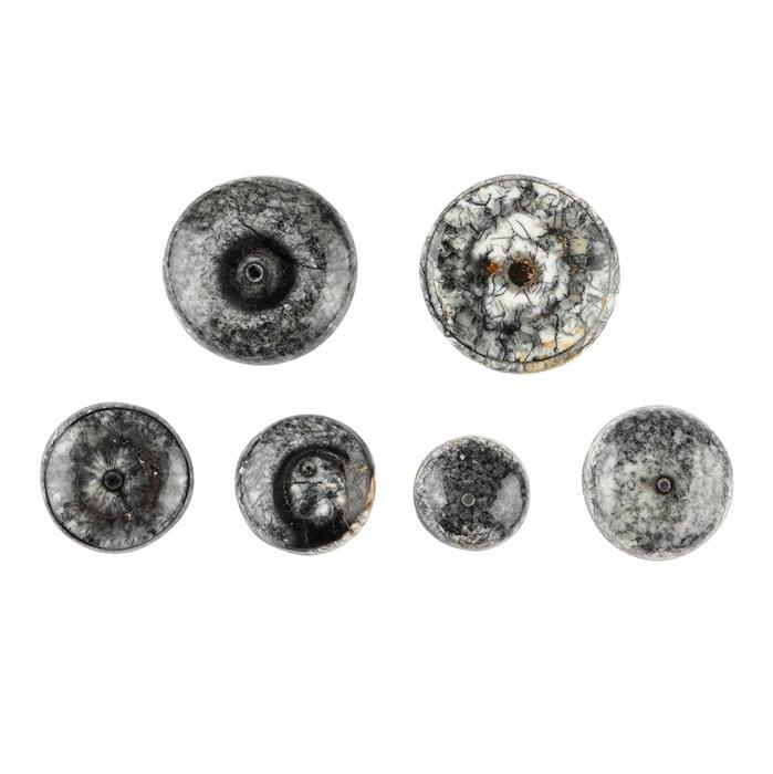 120cts Fossil Eye Multi Shape Cabochons Assortment.