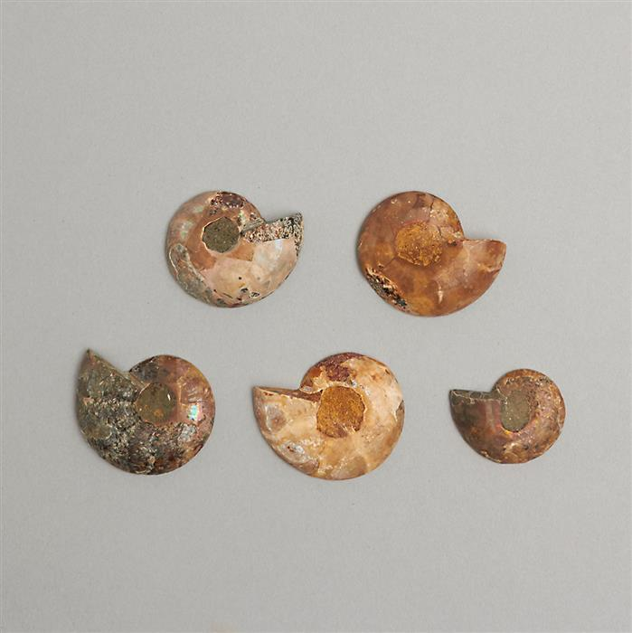240cts Ammonite Fancy Shapes Cabochons.
