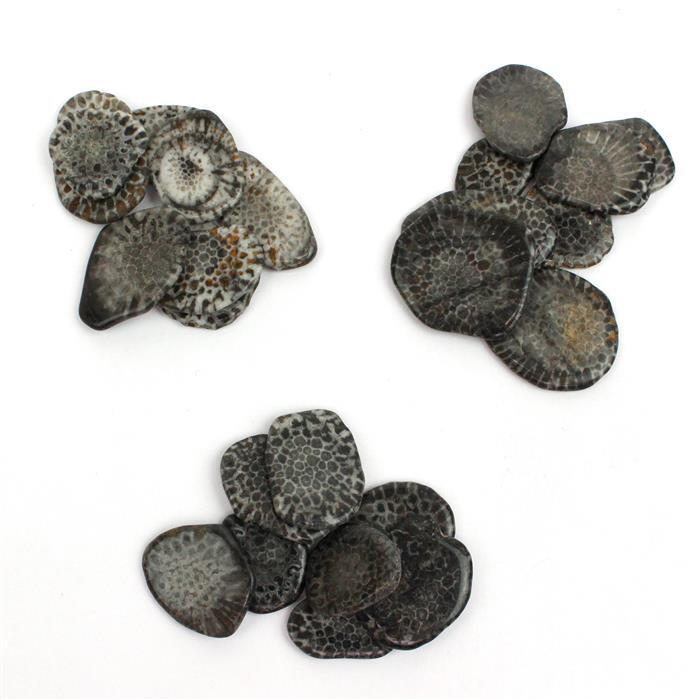 Triple Trouble 3x 35cts Fossilised Coral Plain Slices Assortment.