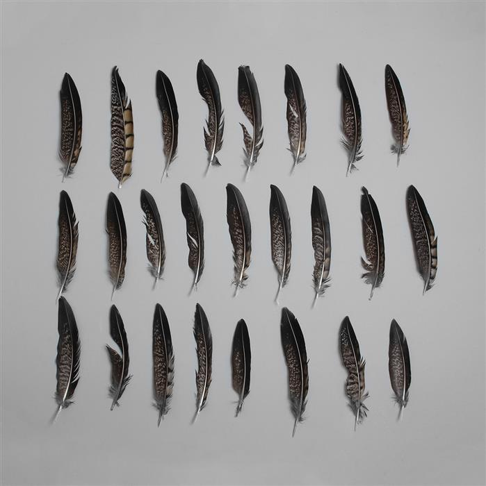 Pheasant Natural Feathers Approx 10-15cm 25pcs/ set