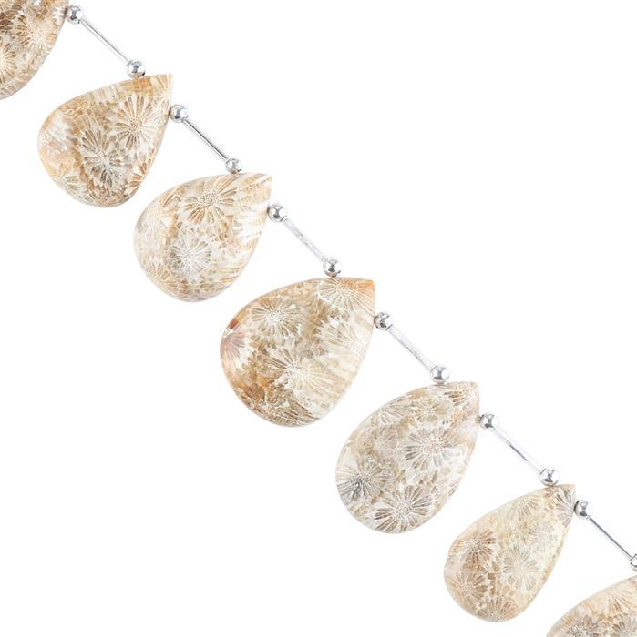 240cts Fossil Coral Graduated Plain Elongated Pears Approx 23x14 to 33x23mm, 16cm Strand.