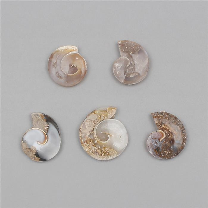 200cts Fossil Ammonite Fancy Shapes Cabochons.