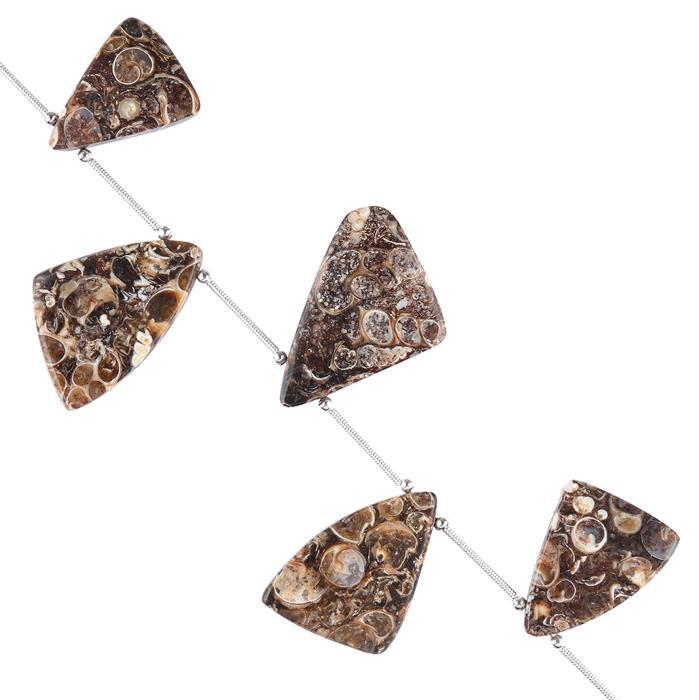 85cts Turritella Agate Graduated Plain Triangular Slices Approx 18x16 to 28x18mm, 10cm Strand.